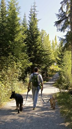 Whistler, BC – A Dog Friendly Day Trip from Vancouver