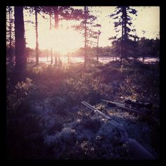 #hunting # Finland #swamp