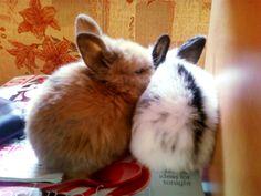 Sleepy bunnies nuzzle before a nap - May 25, 2012