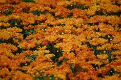 Flower Show Bangalore