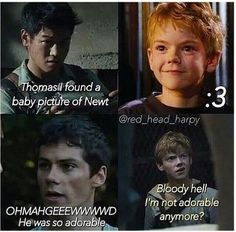 NO, NEWT YOURE STILL ADORABLE!! YA PERFECT SHANK. Sorry about the swear in here. Lol. This is bloody awesome, though!