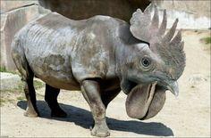 Funny Unprecedented Animals