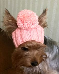 For dogs/pet hats/ Cap for girl dogs/winter by LyudmilaHandmade
