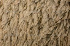 arles-merino-sheep-wool