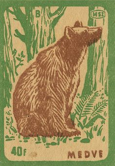 Vintage bear in the woods matchbox label. A Hungarian matchbox label- at the time it cost 40forints. Medve means bear in Hungarian. Very nice!