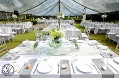 Grey and white splendour under a clear marquee in Africa!