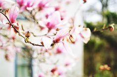 Fenua Beauté: Late Spring in Pennsyljersey