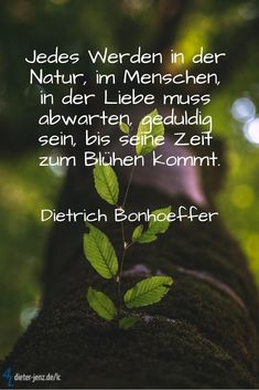 nature quotes Erlebtes, Durchlebtes, in Worte gekl - quotes Wisdom Quotes, Love Quotes, Funny Quotes, Inspirational Quotes, John Maxwell, Positive Thoughts, Positive Quotes, Montag Motivation, Buddhist Quotes
