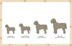 Labradoodle Breeders, Labradoodle Puppies For Sale, Australian Labradoodle, Large Dogs, Small Dogs, Types Of Coats, Guide Dog, Small Breed