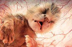 Voici 20 images d'animaux dans le ventre de leur mère... Elles sont tout simplement magiques! - Trop Cute et mignon