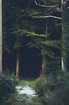 Deep old growth forest campsite.