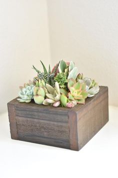 Succulent arrangement succulent gift box office gift sympathy gift birthday gift graduation gift Thank you gift host gift Bosses day gift