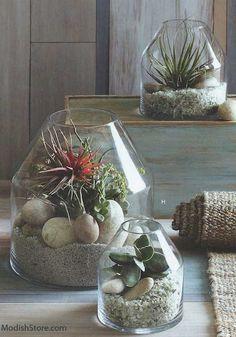 Roost Vida Terrarium Large | Roost Glass Terrariums – Modish Store
