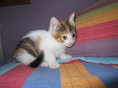 Mascota en adopción en Adoptaloo.com - Carey de mes y medio