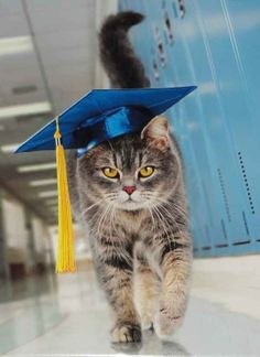 16 Cats-Graduation Day... ideas | cats, cats and kittens, funny cats