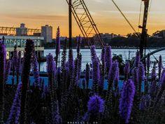 Highland lavender... . . . . #explorenyc #highline #sunrise_sunsets_aroundworld #chasinglight #justgoshoot #acertainslantoflight #makemoments #toldwithexposure #acolorstory #vsco #vscocam #nothingisordinary #visualsoflife#openmyworld #ourplanetdaily #moodygrams #agameoftones #exkart #finditliveit #exploremore #mextures #natgeo #travelstoke #wonderful_places #artofvisuals