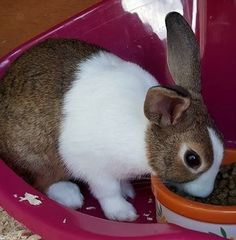 There are lots of ways you can help Blue Cross. Have you thought about rehoming or sponsoring a pet? Meet Hoppy