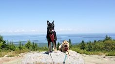 For a long time people have told us that we'd love Acadia National Park for it's pet friendly policies. We spent a few days with the dogs and decided they were right! Find more pet friendly places to stay and things to do near Acadia National Park here: http://www.gopetfriendly.com/browse/united-states/maine/bar-harbor
