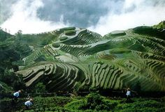 Guizhou Province, China:  A lot of Chinese Hmong live here