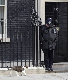 Larry the Downing Street cattakes a stroll through town in London, England.