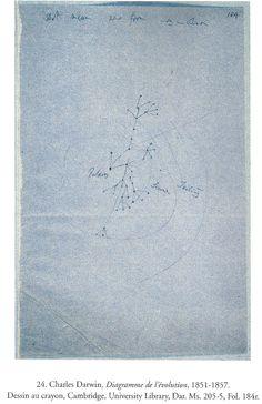 Charles Darwin, premiers diagrammes de l'évolution, 1837 Carnet B p.26 British Museum (Histoire naturelle)