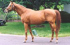 Affirmed / Horse racing nation