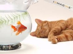 I'll have a goldfish and a tabby cat
