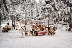 As atrações turísticas mais subestimadas da Europa - Reindeers com Rena sledges na fazenda  Copastur Prime