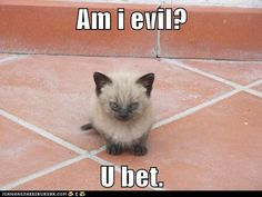 He's too cute to be evil.