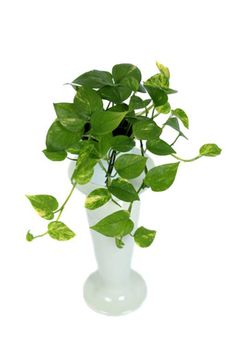 Ten plants that are perfect for growing indoors Best Indoor Plants, Be Perfect, Flowers, Potted Plants, Nature, Deco, Seasons, Sitting Rooms, Florals