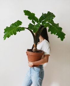 Plants are friends Lawn And Landscape Watering Tips Article Body: When it comes to keeping your lawn Indoor Flowering Plants, Outdoor Plants, Potted Plants, Garden Plants, Silk Plants, Garden Bed, Shade Plants, House Plants Decor, Plant Decor