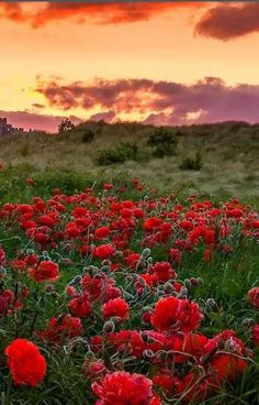 Beautiful nature photograpy: sunset and flowers.