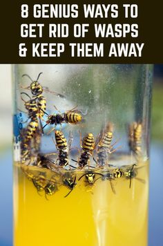 If wasps ruin your summer, then here's how to get rid of them once and for all. Bee Repellent, Diy Mosquito Repellent, Natural Wasp Repellent, Wasp Traps, Bee Traps, Get Rid Of Wasps, Bees And Wasps, Homemade Wasp Trap, Wasp Trap Diy
