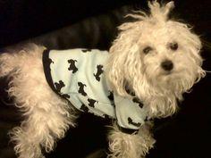 Theodoro y su nueva camiseta de perritos!