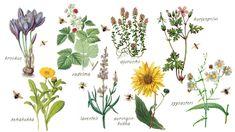 Houkuttele pihaan pölyttäjiä sopivilla kasveilla. Vegetable Garden, Flora, Home And Garden, Green, Plants, Bin, Balcony Gardening, Koti, Fungi