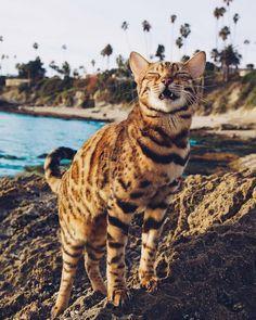 Hear me mewww! funny cats //cute cats//cat photos//cat photography//beautiful… Hear me mewww! funny cats //cute cats//cat photos//cat photography//beautiful cats via Warrior Cats, Cat Ideas, Adventure Cat, Matou, Cat Photography, Tier Fotos, Cat Facts, Beautiful Cats, Cat Breeds