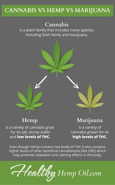 Cannabis Oil NOT What You Think (Hemp vs Cannabis Oil) is part of Cannabis oil - Finally find out the difference! Cannabis oil vs hemp oil What you thought you knew is WRONG! Educate yourself, and make a difference today Cannabis Growing, Cannabis Oil, Medical Cannabis, Cannabis News, Growing Weed, Marijuana Facts, Endocannabinoid System, Cbd Hemp Oil, Oil Benefits