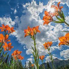 #Repost @corno_gabriele #awesome #amazing #cool #colors #magic #majestic  #lit #light #love #life #Hope #Harmony #Horizons #Idyll #Imagine #Inspired #Incredible #Follow #PhotOfTheDay #Wonderland #Fairytale #flowers #lilies #awakening #mesmerized #enchanted #sunrise