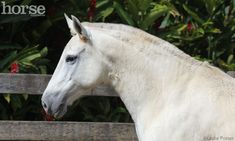 Mangalarga Marchador the national horse of Brazil,  got its name from the farm where the horses were first bred.