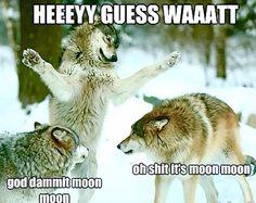 """ ""Oh, sh*t, it's Moon Moon! Funny Animal Jokes, Stupid Funny Memes, Funny Dogs, Funny Animals, Wild Animals, Animals And Pets, Random Stuff, Funny Stuff, Lion"
