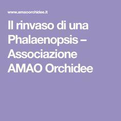 Il rinvaso di una Phalaenopsis – Associazione AMAO Orchidee
