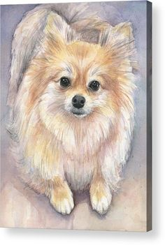 Pomeranian Watercolor Acrylic Print by Olga Shvartsur. All acrylic prints are professionally printed, packaged, and shipped within 3 - 4 business days and delivered ready-to-hang on your wall. Choose from multiple sizes and mounting options.