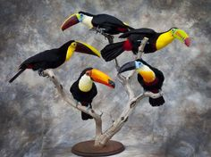 toucans (taxidermy by Cullingford)