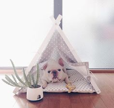 Frenchie and dog teepee bed. Perfect crib for pet. Dog & Teepee - more than just dog bed. We've created a space that your fur babies will love calling home. Cat Teepee, Teepee Bed, Pet Shop, Dog Accesories, Chihuahua, Animal Room, Pet Dogs, Pets, Dog Rooms