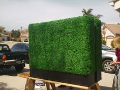 boxwoods growing in design on wall - Google Search