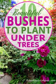 Loving Shrubs: 11 Beautiful Bushes To Plant Under Trees This list of shrubs is perfect for my shade garden. I wasn't sure how to fill in the garden bed and now I have a bunch of options.This list of shrubs is perfect for my shade Garden Shrubs, Flowering Shrubs, Shade Garden, Garden Beds, Garden Plants, Shade Loving Shrubs, Shade Shrubs, Shade Perennials, Shade Trees