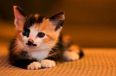 #Cats  #Cat  #Kittens  #Kitten  #Kitty  #Pets  #Pet  #Meow  #Moe  #CuteCats  #CuteCat #CuteKittens #CuteKitten #MeowMoe      Little mustache kitten  ...   https://www.meowmoe.com/45183/