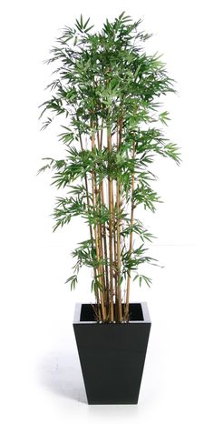 cheap artificial plants - idea- tree <3 that I can't kill :D