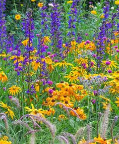 Wouldn't you love your sunny borders to look like this in summer? Low maintenance and easy to grow, all these prolific bloomers will bring fireworks of color to your landscape all summer long!
