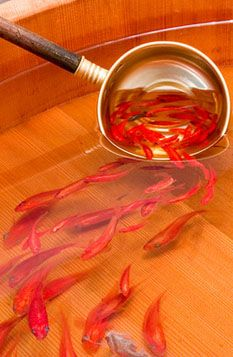 3D goldfish painting by Riusuke FUKAHORI, Japan